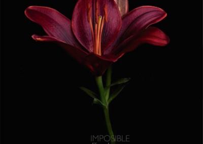 Tapa de Imposible, de Liliana Herrero