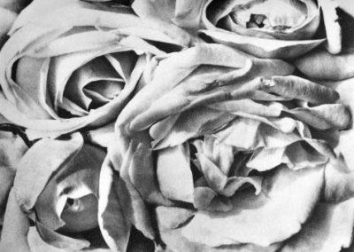 Tina Modotti - Rosas - 1924